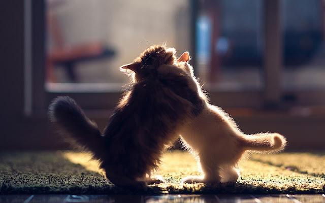 Twee jonge katjes aan het stoeien