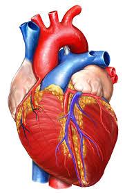 Cara Menangani Jantung Berdebar