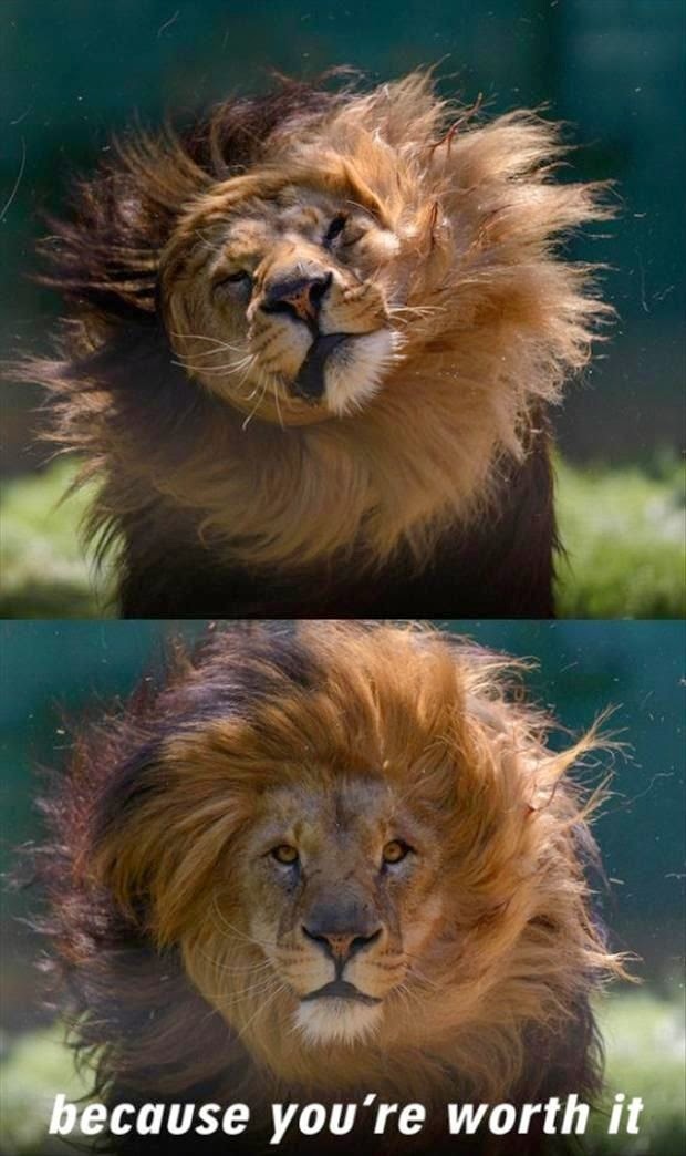 Because You're Worth It Lion joke picture