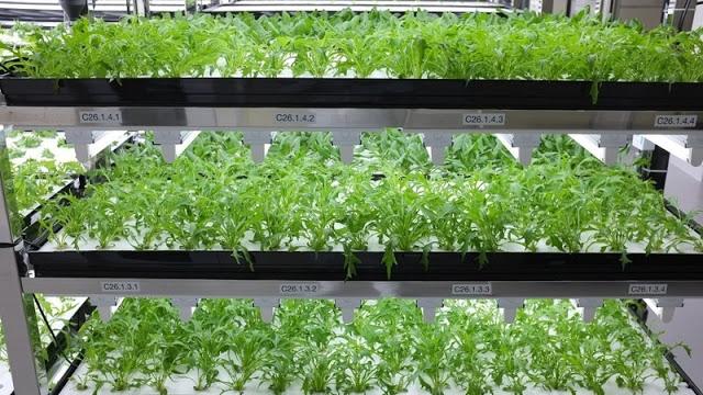 Toshiba Juga Memproduksi Sayur
