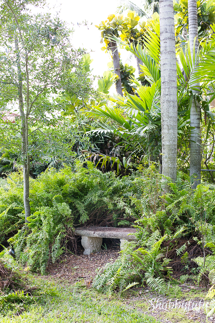 tropical-garden-palm-trees