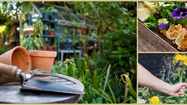Una de blogroll. Revista Espores del Jardín Botánico de Valencia
