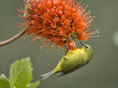 bird-and-flower-wallpaper