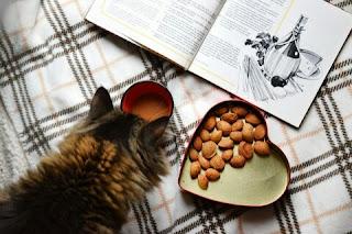 Cara Membuat Makanan Kucing Kering