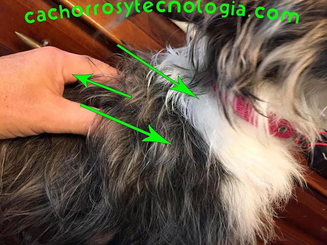 masaje para perros cachorros dog puppy hunt cachorros y tecnologia shurkonrad 8