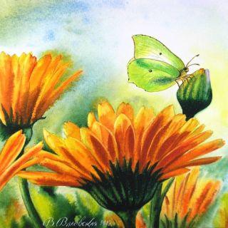 Акварельные рисунки цветов. Валентина Валевская