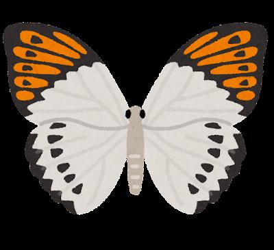 ツマベニチョウのイラスト