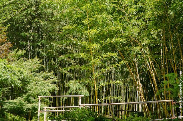 Bambú Villa Carlota Lago di Como Italia viaje
