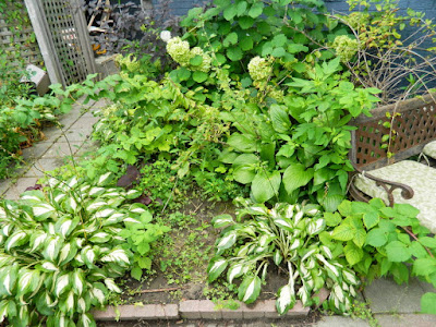 Leslieville Toronto Front Garden Cleanup Before by Paul Jung Gardening Services--a Toronto Gardening Company