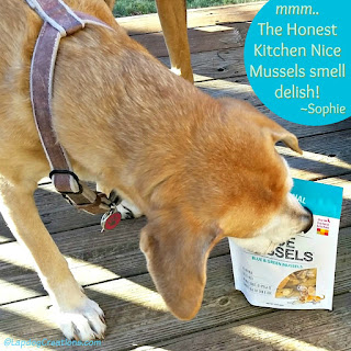 senior hound mix dog with mussels treats