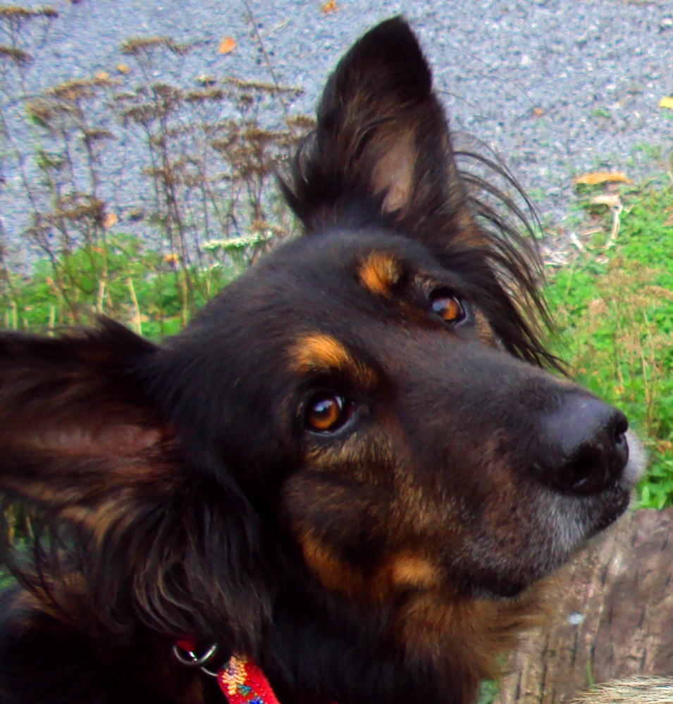 Inner Eye Infection In Dogs