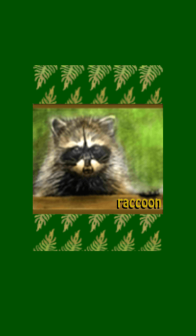I love animals - raccoon