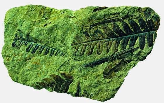 Resultado de imagen para isla James Ross,rescatar fósiles de vertebrados, invertebrados y plantas en sedimentos, restos del Jurasico y cretacico