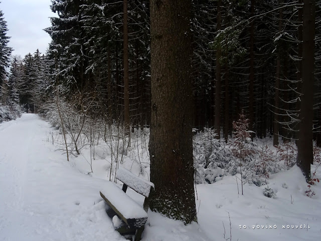 Δάσος στο χιόνι / Winter forest scene, Bavaria, Germany