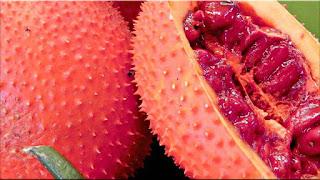 gambar buah tepurang