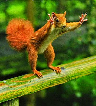 High dive squirrel funny animals gif