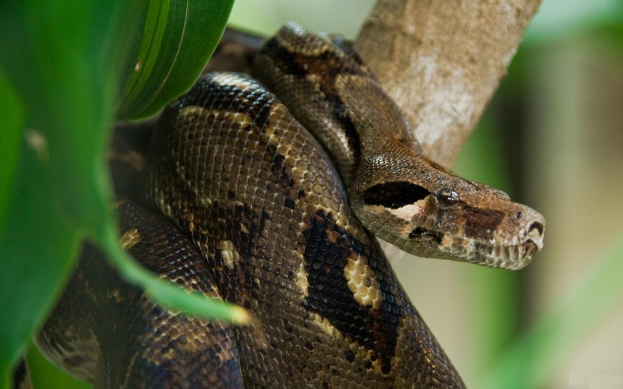snake - photo #39