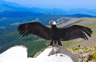 How high do birds fly?