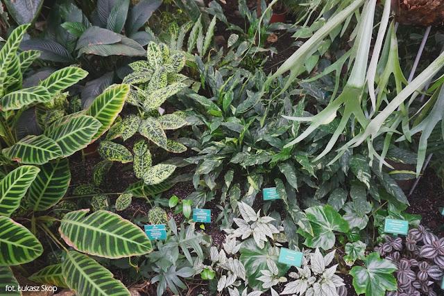 kolekcja roślin w palmiarni w łodzi