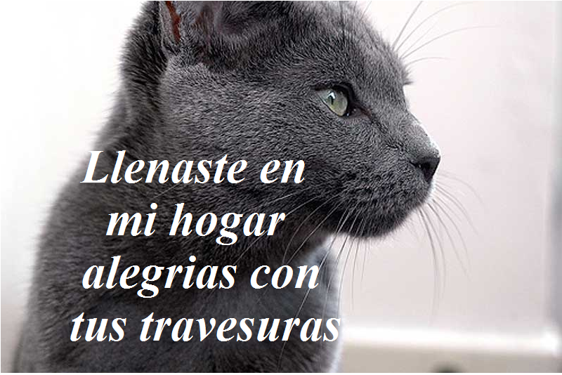 Imagenes De Frases Bonitas: Imagenes Lindas Para Compartir Fb: Frases Bonitas Para Mi