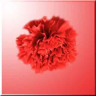 yedi karanfil Vücut dinçlik, Dianthus enerji, Nezle,  Grip, Caryophyllaceae  fayda, yarar, zarar,  Göğüs,  yumuşak,  öksürük,  Balgam,   Diş ağrısı,  Sinir,   Midevi, Yatıştırıcı,  spazm, . İştah    beyaz karanfil    ağlama karanfil    karanfil faydaları    karanfil sözleri    karanfil mustafa ceceli    yedi karanfil fon    Yerçekimli Karanfil - Written Work