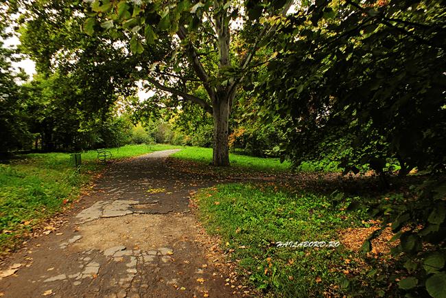 parcul botanic timisoara toamna