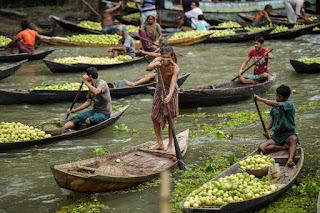番石榴市场孟加拉国