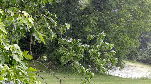 summer, rain, tree, pond