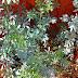 Arruda: Uma planta de muitos usos e Tradições