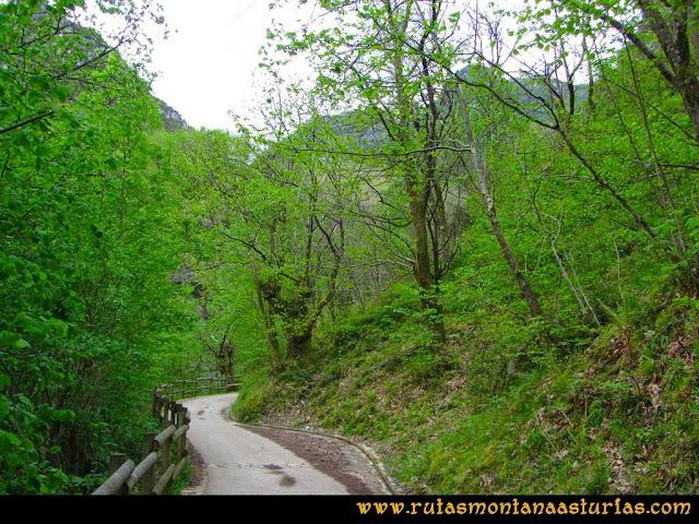 Ruta del Alba: Camino hormigonado junto a la vegetación