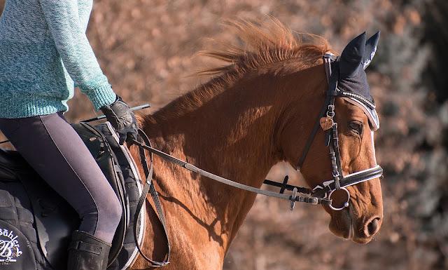Sposoby na ustabilizowanie ciała w jeździectwie (czyli jak się przestać tyle ruszać)