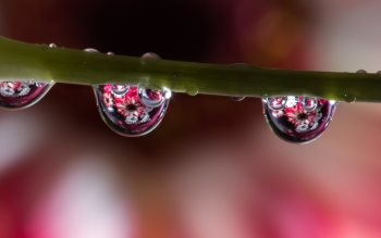 Wallpaper: Waterdrop Refraction