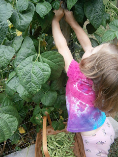 child picking beans in garden