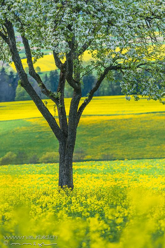 gedanke zu leuchtendem gelb