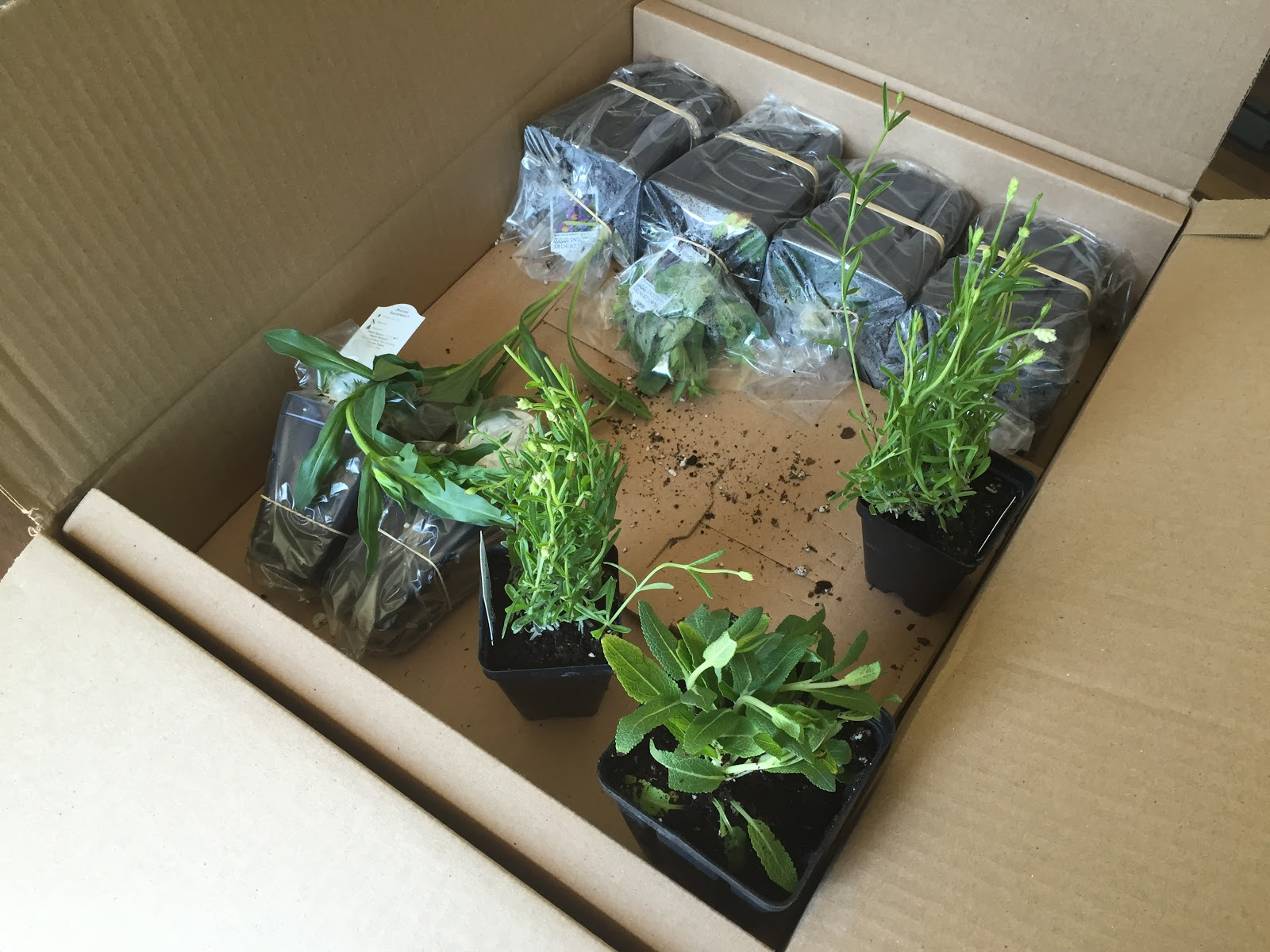 mail order plant packages