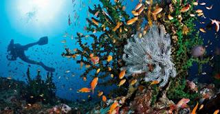 Wisata ke Pulau Rubiah Aceh, Anda Akan Lupa Pulang Ke Rumah