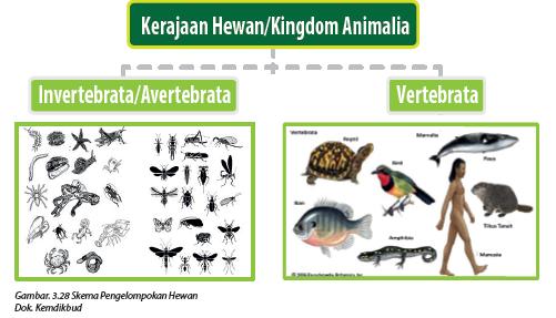 4700 Gambar Hewan Yang Termasuk Avertebrata Terbaru