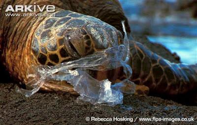 Plastikler deniz canlılarının hayatını tehdit ediyor.