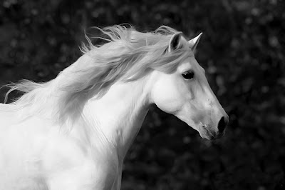 White Horse Wallpapers Gratis Gambar Background Wallpaper