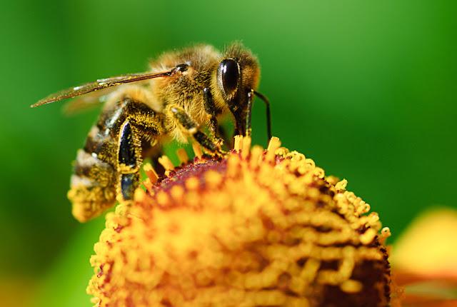 Schülereinsatz für Bienen und Biodiversität