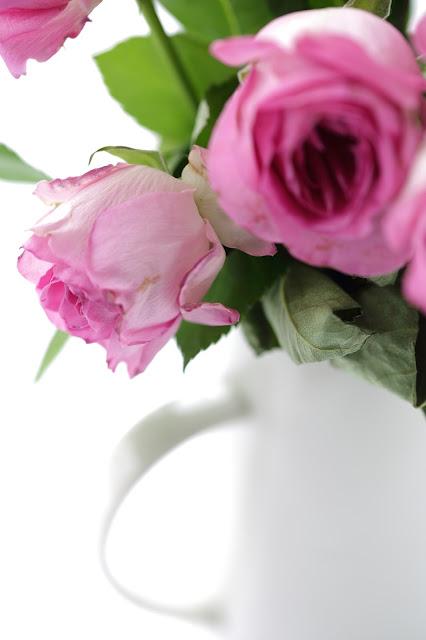 pinkki ruusu, stillkuva ruususta