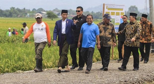 Jokowi Tinjau Pelaksanaan Padat Karya Tunai