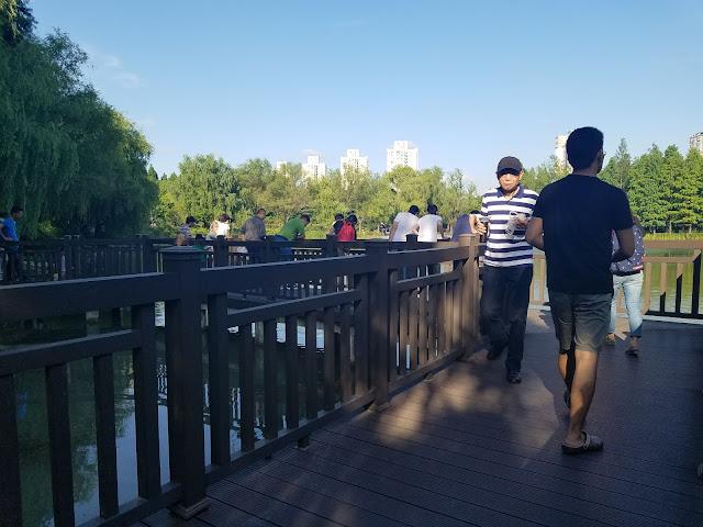 金桥公园插图2