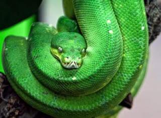 Arti mimpi melihat dan bertemu ular menurut primbon dan buku mimpi