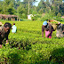 CBN Agric Programme: Association to Facilitate 500,000 Maize Farmers