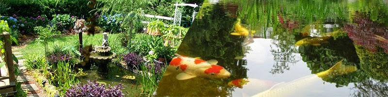 estanque con peces koi