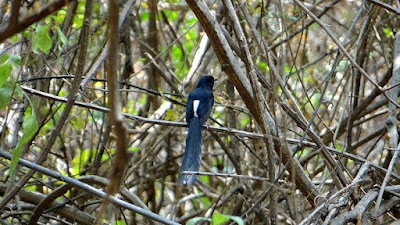 4 Cara Ampuh Dan Akuart Proses Perawatan Burung Bakalan Muda Hutan Supaya Tetap Hidup