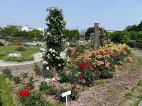 若園公園バラ園