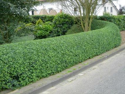Benefits of living fences 3