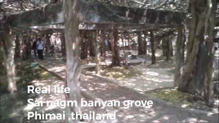 Sanhok's Bhan exists in a banyan grove in thailand